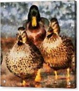 Duck - Id 16235-220308-3425 Acrylic Print