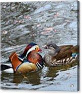 Duck Love Acrylic Print