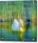Duck On A Mission Acrylic Print
