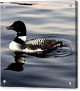 Duck On The Lake Acrylic Print