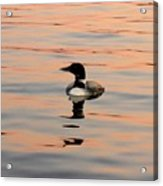 Duck On The Water Acrylic Print