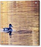 Duck Pond 3 Acrylic Print