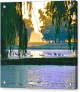 Duck Pond At Dawn Acrylic Print