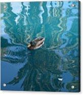 Duck Swimming In The Blue Lagoon Acrylic Print