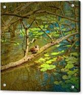 Duck Tales.  Acrylic Print