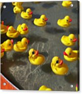 Duckies Acrylic Print