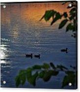 Ducks At Daybreak  Acrylic Print