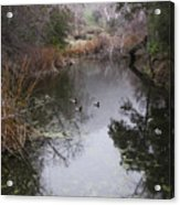Ducks From The Bridge Acrylic Print