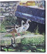 Ducks On Dockside Acrylic Print