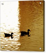 Ducks On Pond 2 Acrylic Print