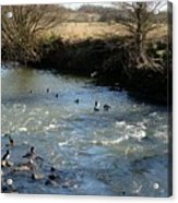Ducks On The River In Early Spring Acrylic Print