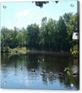 Ducks On The River Acrylic Print
