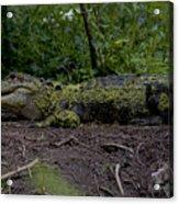 Duckweed Camouflage Acrylic Print