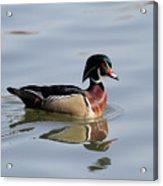 Ducky Acrylic Print