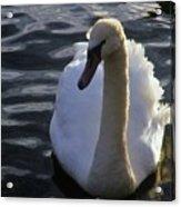 Duddingston Swan 13 Acrylic Print