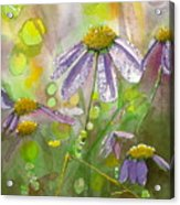 Due Today Z - Dew To Daisy Acrylic Print