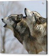 Duet Howl Acrylic Print