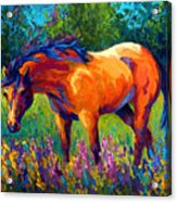 Dun Mare Acrylic Print by Marion Rose