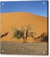 Dune 45 And Trees Acrylic Print