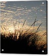 Dune Grass Acrylic Print