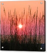 Dune Grass Sunset Acrylic Print
