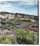 Dune Plants As Erica And Beautiful Sky Acrylic Print