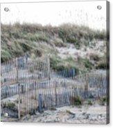 Dune Walk Acrylic Print
