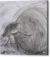 Dung Beetle Acrylic Print