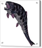 Dunkleosteus Fish On White Acrylic Print