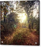 Dunmore Wood - Autumnal Morning Acrylic Print