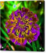 Durango Outback Mix 05 - Photopower 3203 Acrylic Print