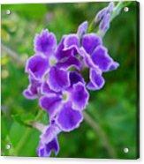 Duranta Flower 2 Acrylic Print