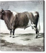 Durham Bull, 1856 Acrylic Print