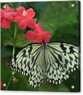 Durham Butterfly #5 Acrylic Print