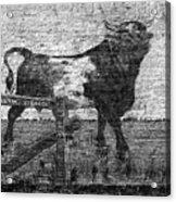 Durham's Bull Acrylic Print