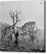 Dusk, Crannoch Woods Acrylic Print