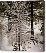 Dusk In The Sierras Acrylic Print