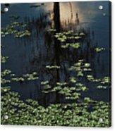 Dusk In The Swamp Acrylic Print