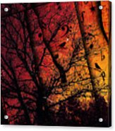 Dusk Song Acrylic Print