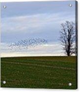 Dusk Tree And Birds Acrylic Print