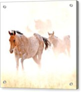 Dusty Emergence 001 Acrylic Print