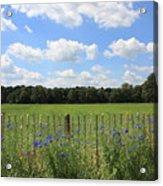Dutch Blue Acrylic Print