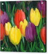 Dutch Tulips Acrylic Print
