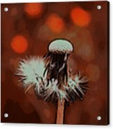 Dying Blowball Acrylic Print