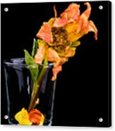 Dying Dahlia Flower Acrylic Print