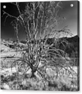 Dying Tree Acrylic Print