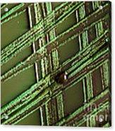 E. Coli In Culture Dish, Macro Image Acrylic Print