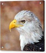 Eagle 10 Acrylic Print