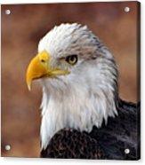 Eagle 25 Acrylic Print