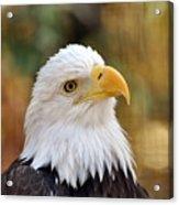 Eagle 9 Acrylic Print